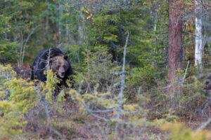 Comentaris del Jurat de la tercera Convocatòria Fauna en LLibertat